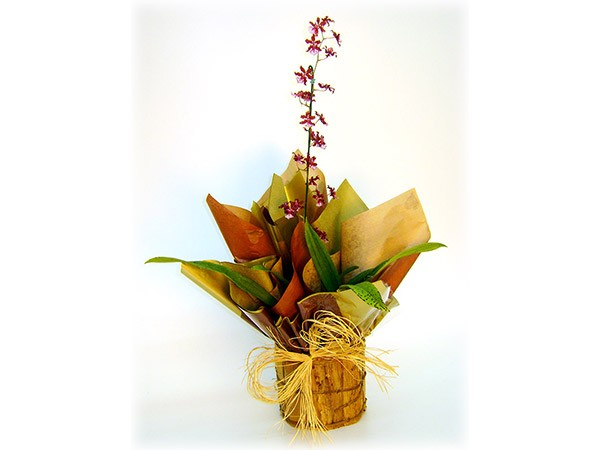 ORQUIDEA-CHOCOLATE